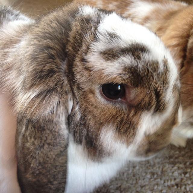 Carter face. #bunny #cute