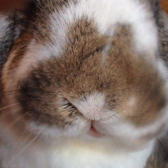 #bunny chews treats