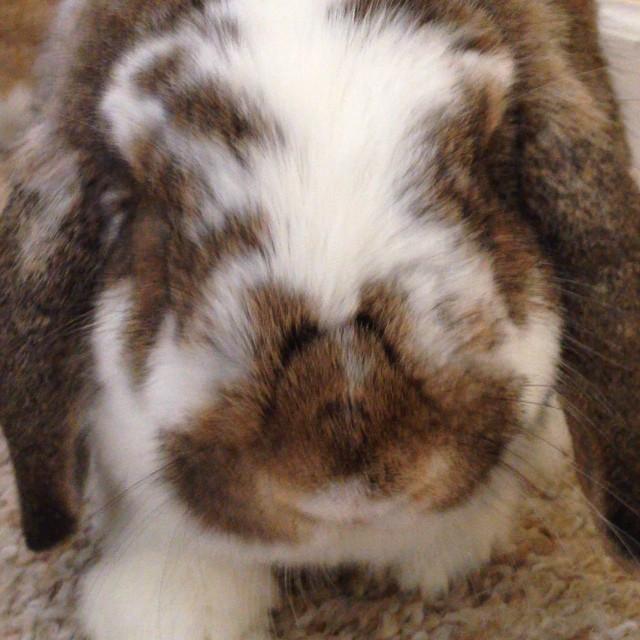 Guess who I saw today! #cute #bunny #bunniesofinstagram